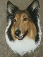 Buddy the Collie by CatalystSwitch
