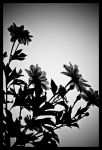 Sunflower Silhouette by NoelleLaBelle