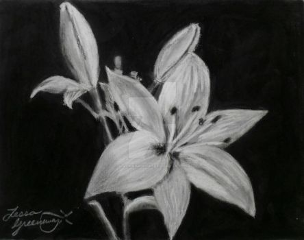 White Charcoal Lily by blacknimproud