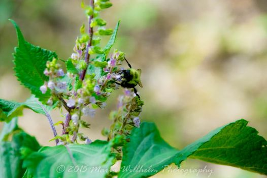 Busy Bee 9-13-370 by MariaWillhelm