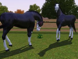 Sims 3 Horse Marking Download: SplashWhiteSet2 by Isolated-Design
