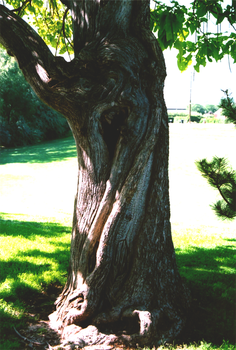 Possessed Tree by Vergiftet