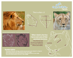 Lion faces by sindos