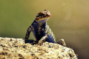 Geckoo :) by Blackfoot-photograph