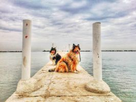 6 dogs by hermio