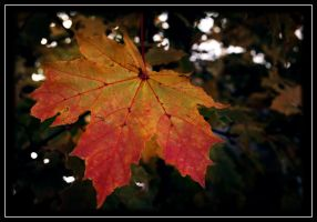Autumn IV by Skycode
