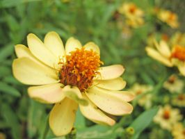 Yellow Flower by parka