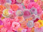 60 Roses Colored by TNBrat