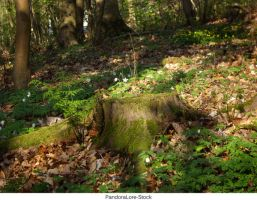 Tree Stump 30 by AnitaJoy-Stock
