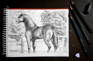 Horse Study by S-A--K-I