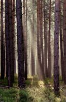 forest and light by Traumsturm