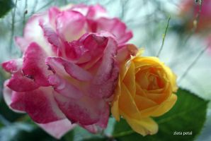 yellow and pink flowers by Zlata-Petal