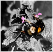 Bumble Bee by MattNick