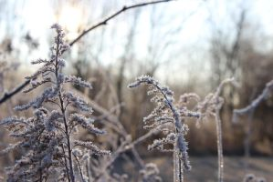 December Frost by Lyrak