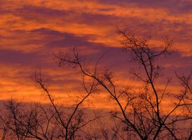 Colours on the winter morning sky by FuZoom