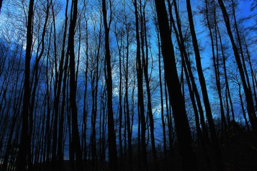 Blair Witch Forest by 0-Akascha-0