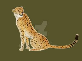 International Cheetah Day: The Cheetah by Ski-0