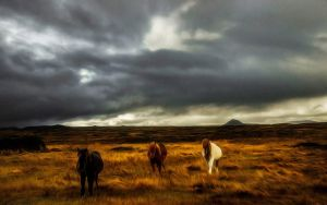 Wild Welsh Ponies by welshdragon
