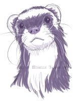 Ferret by Adre-es