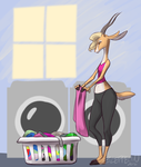 Dry Everything by Dendropsyche