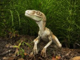 Raptor Photos 4 by SylxeriaGuardian