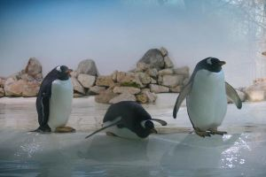 Penguins by Silverwing9960