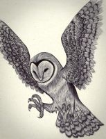 OWL by carldraw