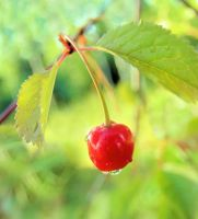 a cherry by KariLiimatainen