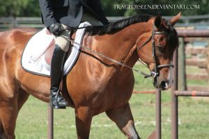 Quarter Horse Stock 95 by tragedyseen