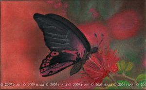 Butterfly _Oil-color by h86art