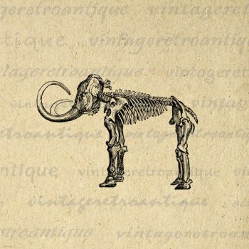 Mammoth Skeleton Digital Graphic No.443 by VintageRetroAntique