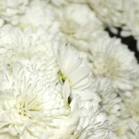 White Flowers by Roky320