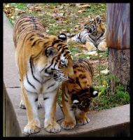 Tiger Family by Sathiest-Emperor