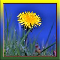Mellow Yellow by FrankAndCarySTOCK