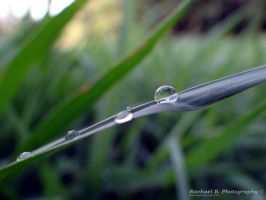 The Drop of Life by jellybean12365