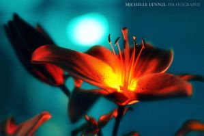Fireflower - it's no plastic by Michelle-Fennel