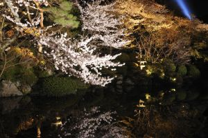 In kyoto spring-13 by Bros-Chu