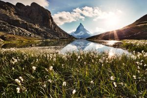 Matterhorn and the flowers by stee65