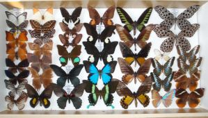 Butterfly Collection 2 by VinVagia