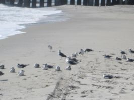 Seagulls On The Beach by kdawg7736