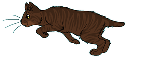 ThunderClan - Halftail by WildpathOfShadowClan