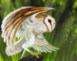 The Barn Owl by Partin-Arts