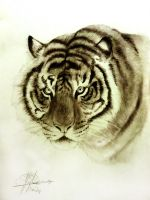 graphite tiger by XagroS