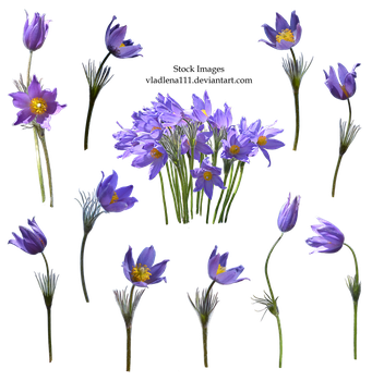 Spring flowers PNG  2 by Vladlena111