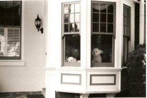 Pups in the Window by Missvirginia