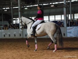 Dressage Horse Stock 6 by lee-mare