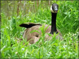 Mama Goose by 1000--Words