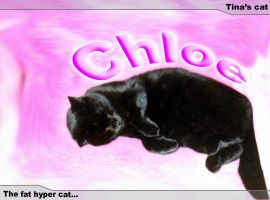 Chloe the fat hyper cat by crazh