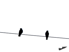 Birds on Power Line 2 by skinsvideos21