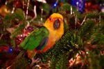 Rainbow Conure by EdibleRainbows